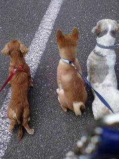 三匹のわんこw