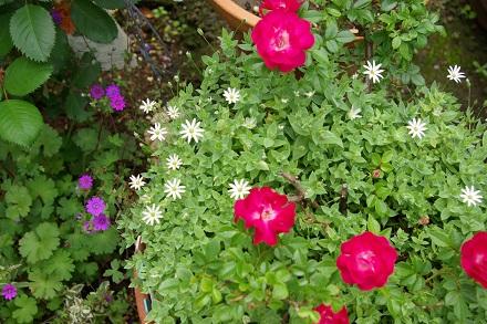 ちいさな…お花。