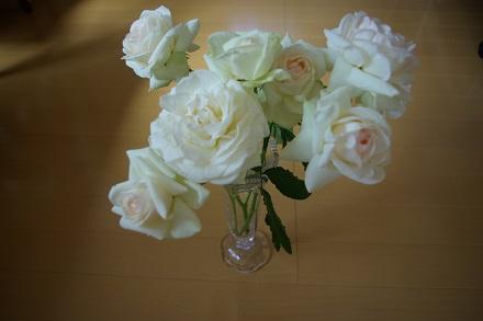 rie家の薔薇。すってき~。