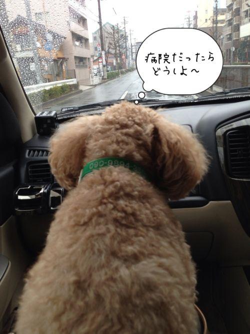 poko車中