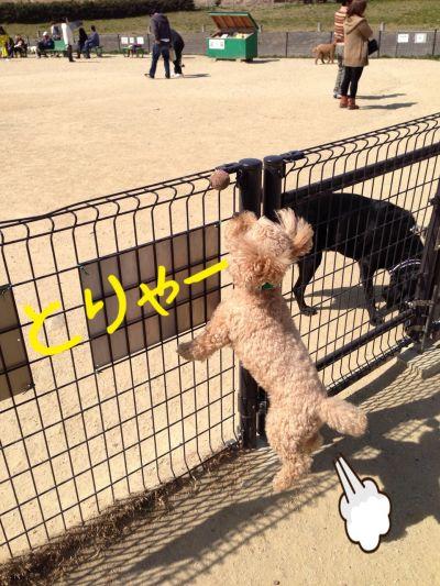 公園~買い物5
