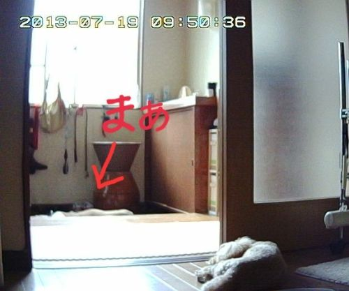 留守番カメラ6