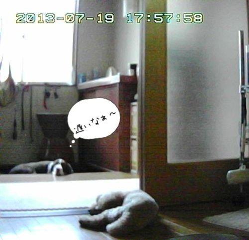 留守番カメラ8