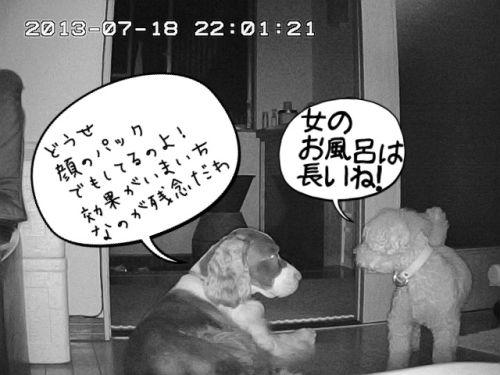 留守番カメラ12