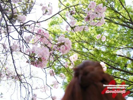 20110520_003.jpg