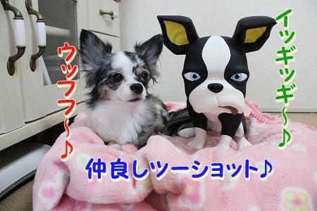お兄ちゃん登場~♪  (12)