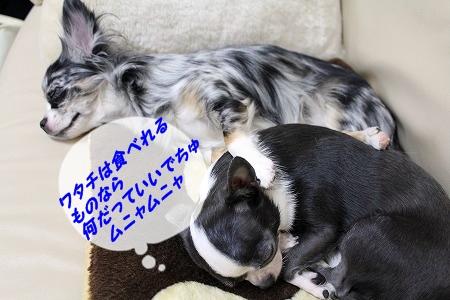 すやすや♪ (4)