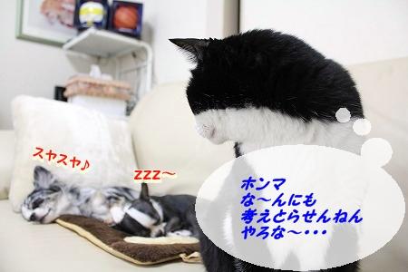 すやすや♪ (6)