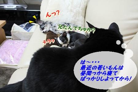 すやすや♪ (5)