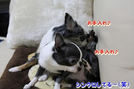 良く寝た~♪  (4)