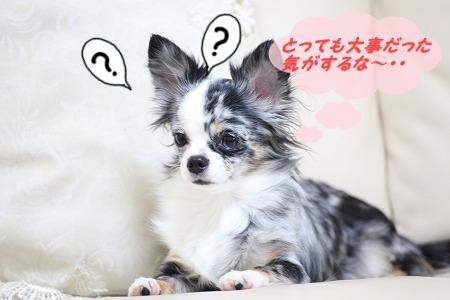 何だっけ~? (1.5)
