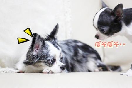 何だっけ~? (2)
