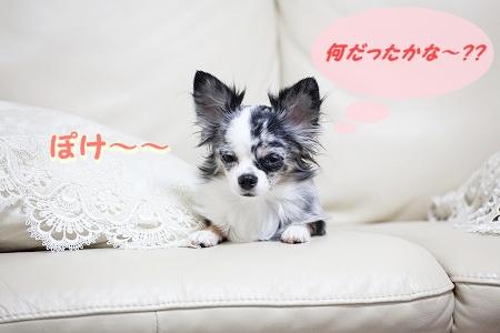 何だっけ~? (1.4)