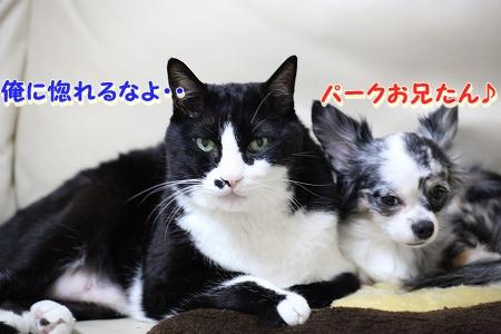 仲良し~♪ (3)