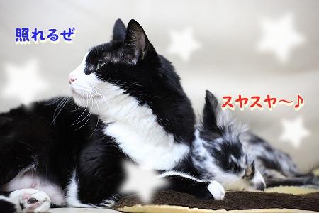仲良し~♪ (4)