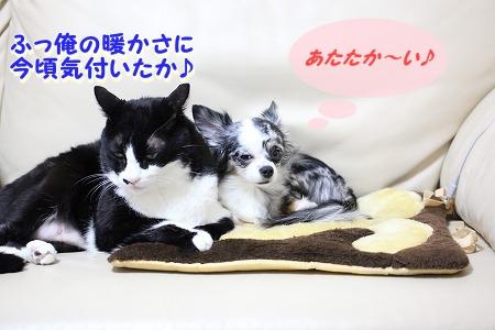 仲良し~♪ (2)