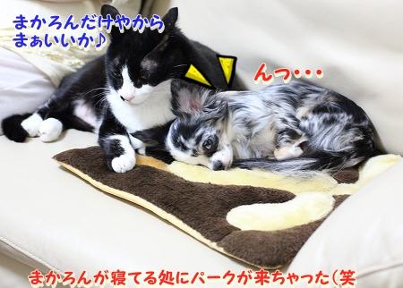 仲良し~♪ (1)