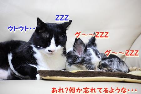 仲良し~♪ (7)
