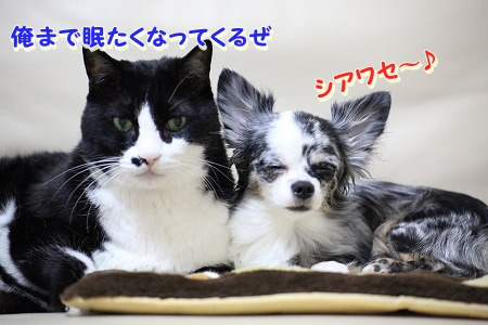 仲良し~♪ (6)