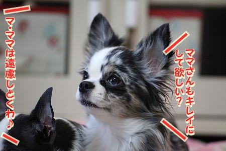 ぽてちゃん♪ (6)