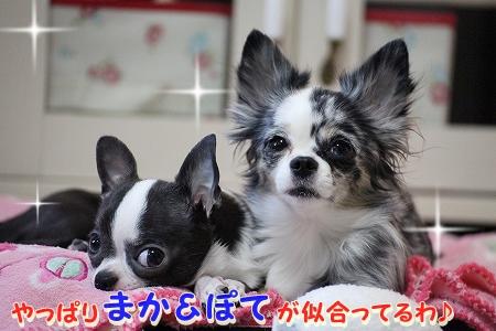 ぽてちゃん♪ (7)