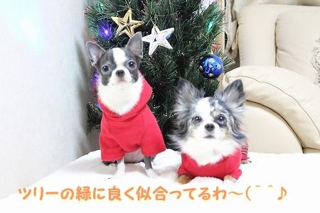 クリスマスカラー♪ (2)