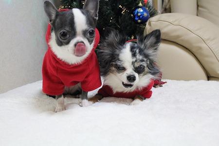 クリスマスカラー♪ (4)