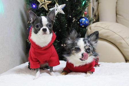 クリスマスカラー♪ (3)