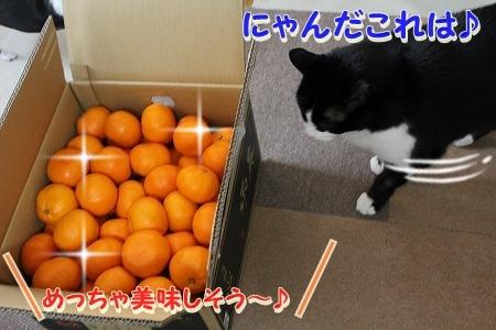 頂きもの♪ (1)