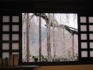 慈雲寺 桜 窓