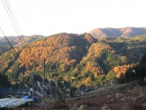 マキオカ秋景色