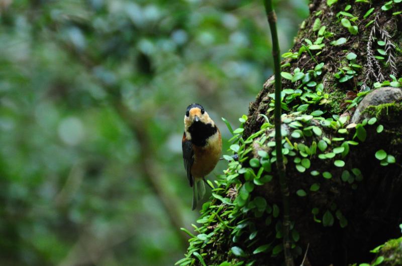 野鳥撮影を始めるきっかけになった鳥
