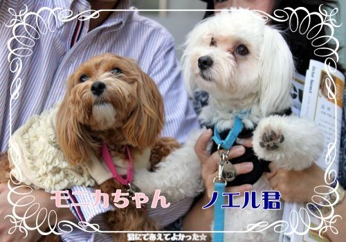 216_20111031193608.jpg