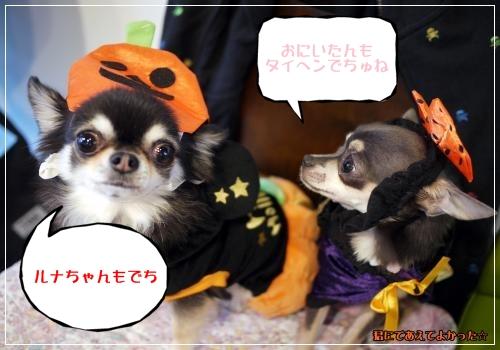 568_20111023210432.jpg