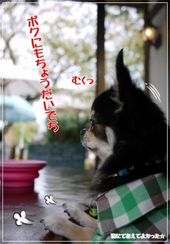 735_20111108221348.jpg