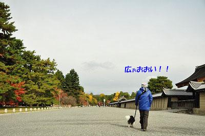 20121123-gyo01.jpg