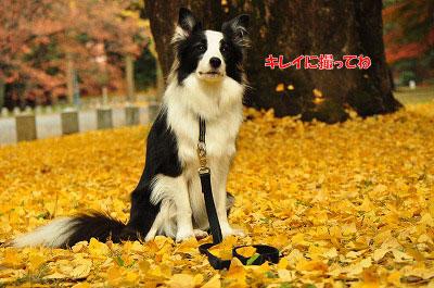20121123-gyo07.jpg