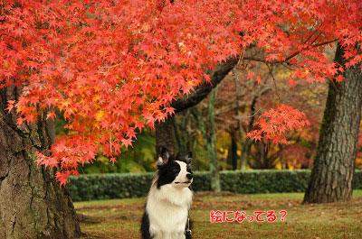 20121123-gyo10.jpg