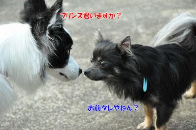 20121123-kis07.jpg