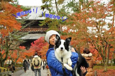 20121123-nan04.jpg
