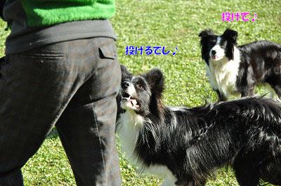 20121123-wan02.jpg