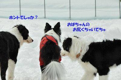 20130119rai06.jpg