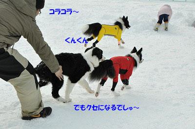 20130119rai09.jpg