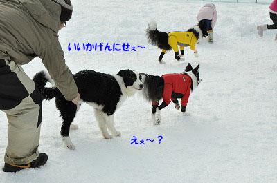 20130119rai10.jpg