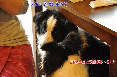 20130511-wanc06.jpg