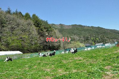 20130512-wan01.jpg