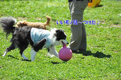 20130512-wan07.jpg