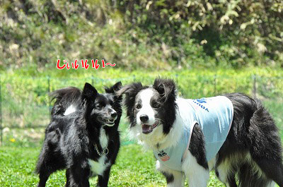 20130512-wan09.jpg