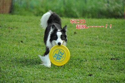 20130814-wan01.jpg
