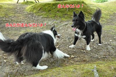 20130817_oyu_run00.jpg